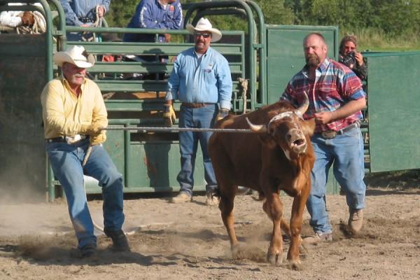 steer deco1